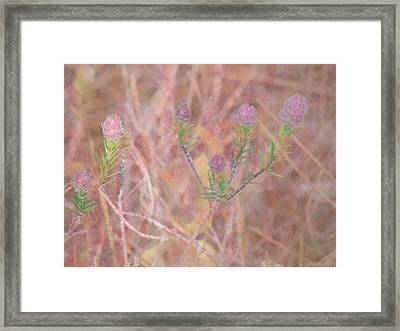 Sweet Clover Framed Print