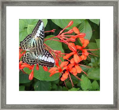 Sweet Coral Framed Print