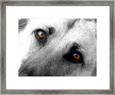 Sweet Eyes Framed Print