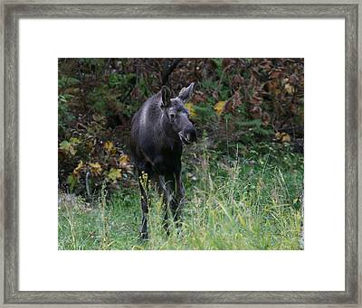 Framed Print featuring the photograph Sweet Face by Doug Lloyd