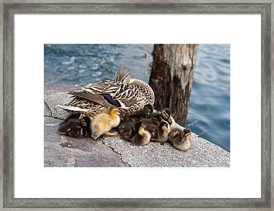 Sweet Family Framed Print by Andrea Barbieri