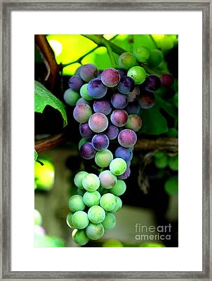 Sweet Grapes Framed Print by Carol Groenen