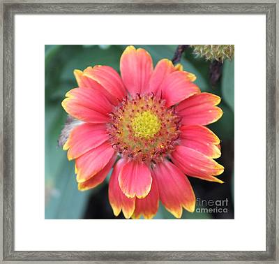 Sweet In Pink Framed Print by Marilyn West