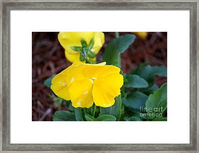 Sweet Indigo Framed Print by Bret Worrell