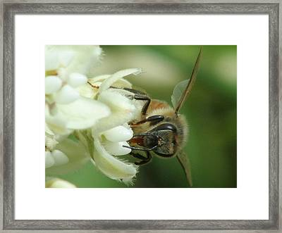 Sweet Job Framed Print by Sean Green