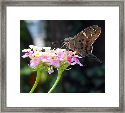 Sweet Lantana I Framed Print by Sheri McLeroy