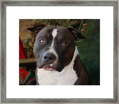 Sweet Little Pitty Framed Print