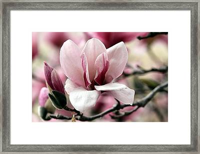 Framed Print featuring the photograph Sweet Magnolia by Elizabeth Winter
