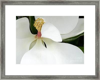 Sweet Magnolia Flower Framed Print by Sabrina L Ryan