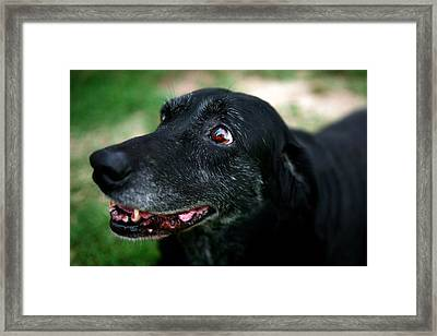 Framed Print featuring the photograph Sweet Mariah by Lon Casler Bixby
