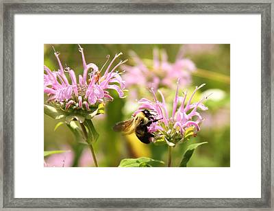 Sweet Nature Framed Print