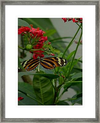 Framed Print featuring the photograph Sweet Nectar by Frank Wickham