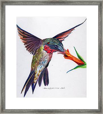 Sweet Nectar Framed Print by Mindy Newman