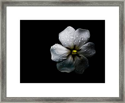 Sweet Nothings Framed Print by Victoria Ashley