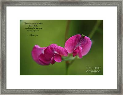 Sweet Pea Flower Framed Print by Tyra  OBryant