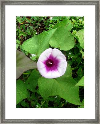 Sweet Purple Flower Framed Print by Juliana  Blessington
