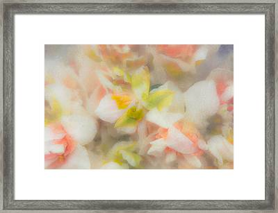 Sweet Push Framed Print