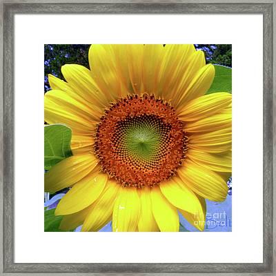 Sweet Summer Sunflower Framed Print by Christine Belt