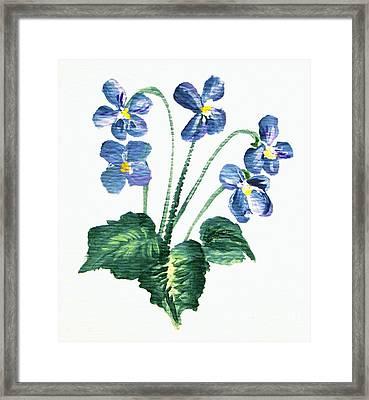 Sweet Violets Framed Print
