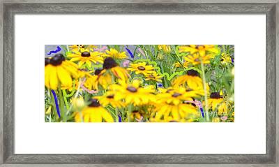Sweet William Framed Print by Karen Francis