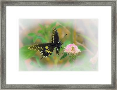 Sweeter Than The Rest Framed Print by Tom York Images
