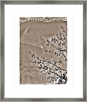 Sweetgum Sepia Framed Print by Judi Bagwell