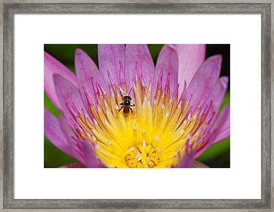 Sweetness Framed Print by Ng Hock How