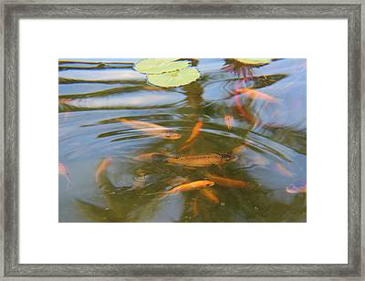 Swim To The Surface Framed Print by Raquel Amaral