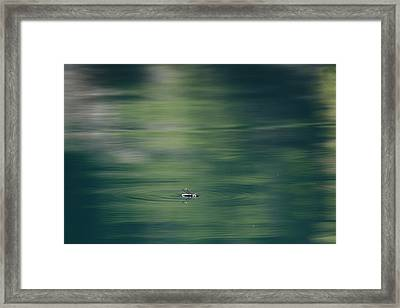 Swimming Beetle Framed Print by Cathie Douglas