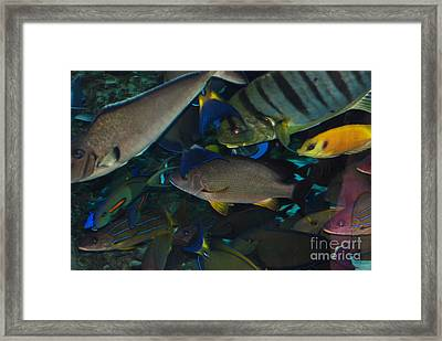 Swimming Fish Framed Print by Andrea Simon