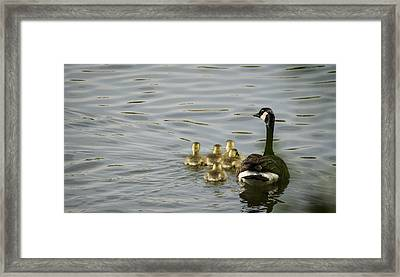 Swimming Lessons Framed Print