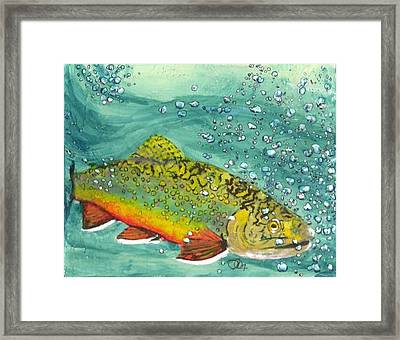 Swimming Upstream Framed Print