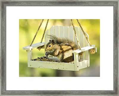 Swingin Squirrel Robber Framed Print by Bill Tiepelman