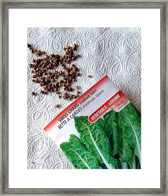 Swiss Chard Seeds Framed Print by Will Borden