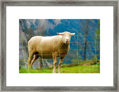 Swiss Made Framed Print by Syed Aqueel