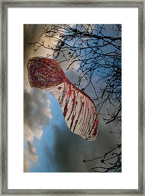 Sycamore More Framed Print by Jez C Self