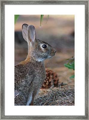 Sylvia Framed Print by Lynda Dawson-Youngclaus