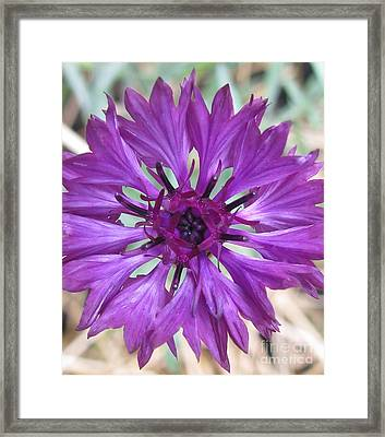 Framed Print featuring the photograph Symetrically Sane by Tina Marie