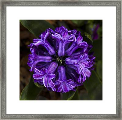 Symmetry In Purple Framed Print