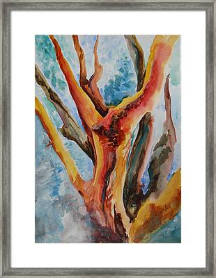 Symphony Of Branches Framed Print