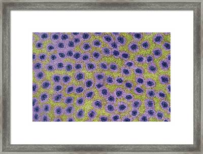 Synaptic Fires Framed Print by Lesa Weller