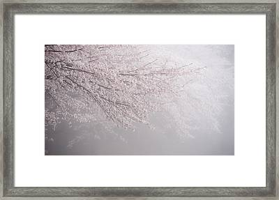 [syou-ka] Framed Print by Copyrights(c) All rights reserved by Syouta Nagase