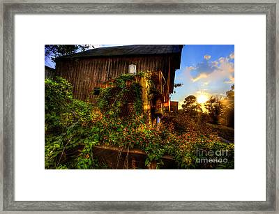 Tactor Overgrown With Flowers And Weeds At Sunset Framed Print by Dan Friend