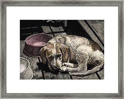 Taffy The Dog Framed Print by Robert Goudreau