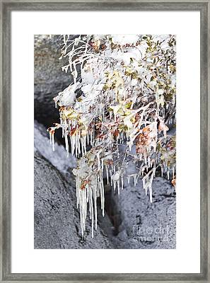 Tahoe Bush Icicles Framed Print