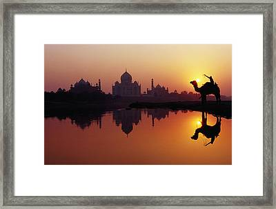 Taj Mahal & Silhouetted Camel & Reflection In Yamuna River At Sunset Framed Print by Richard I'Anson