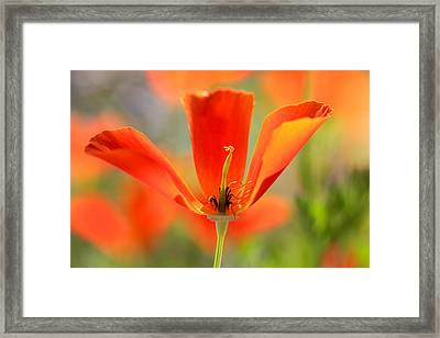 Take A Look Inside Framed Print by Heidi Smith