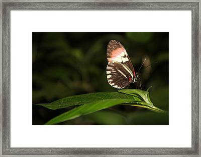 Take A Pose Framed Print