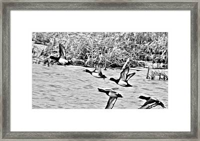 Take Flight No. 2 In Black And White Framed Print by Janice Adomeit
