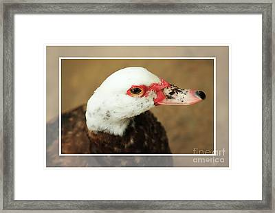 Framed Print featuring the photograph Take Me Home by Lori Mellen-Pagliaro